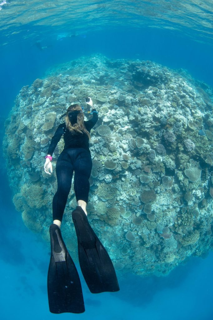 Diver Michelle Barry undertakes Great Reef Census survey must credit Gabriel Guzman Underwater images
