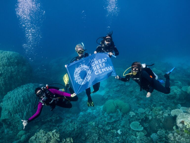 Divers hold Great Reef Census banner during survey expedition on Spirit of Freedom must credit Grumpy Turtle Creative 768x576 1